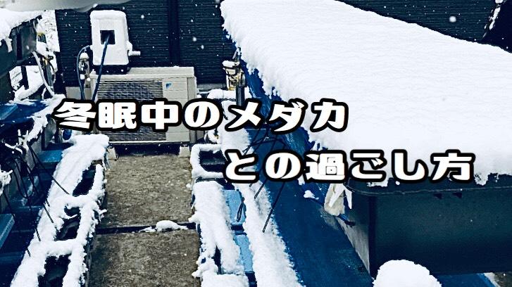 メダカは、隠れ家で冬眠。メダカの冬越しの準備の「コツ」と「まとめ」
