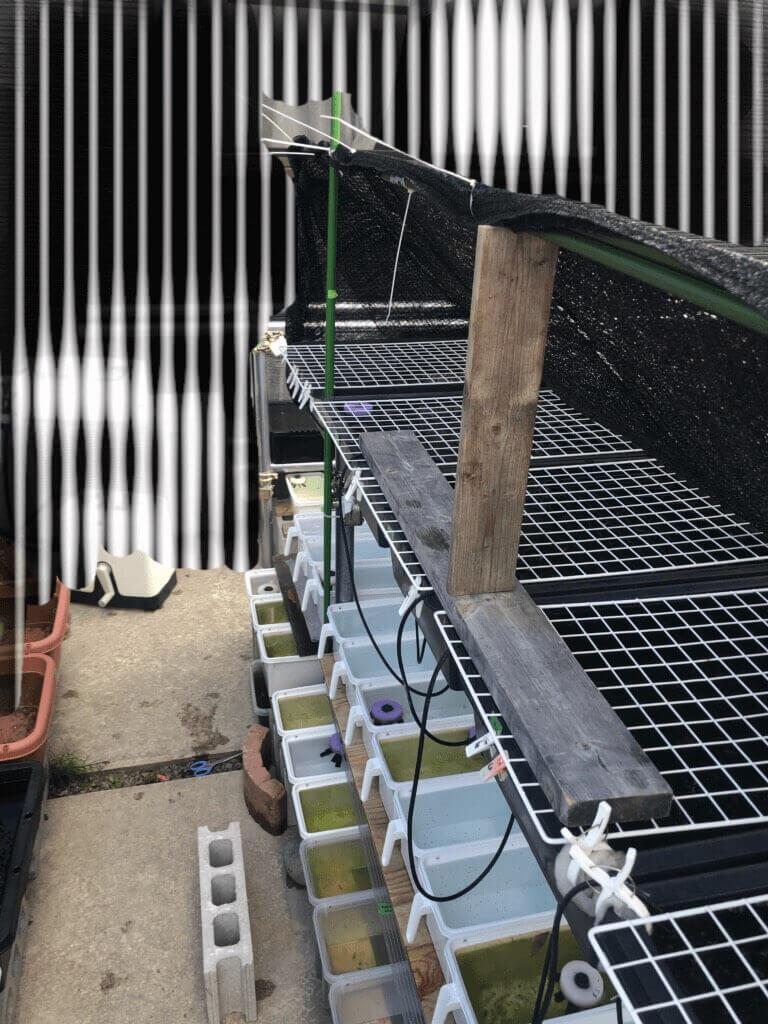 メダカの暑さ対策の遮光ネット