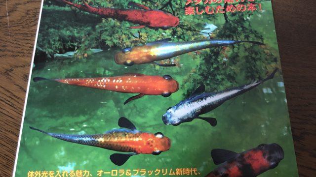 メダカ百華vol.6