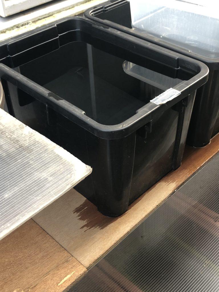 種親メダカの容器