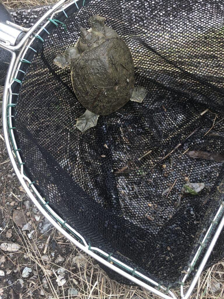 ガサガサで捕まえた魚