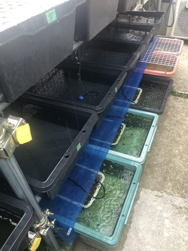 メダカ容器の雨対策