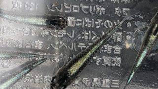 黒飯メダカ極(黒星河メダカ)