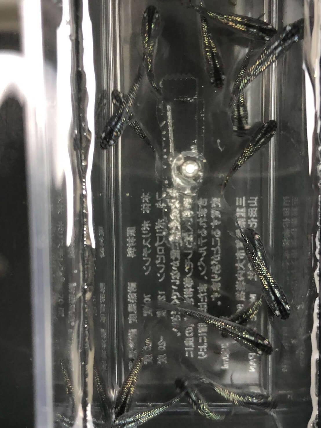松井ヒレ長黒ラメ幹之メダカのオス(2019年春産まれ)