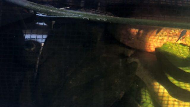 メダカの冬越しとメダカ飼育容器