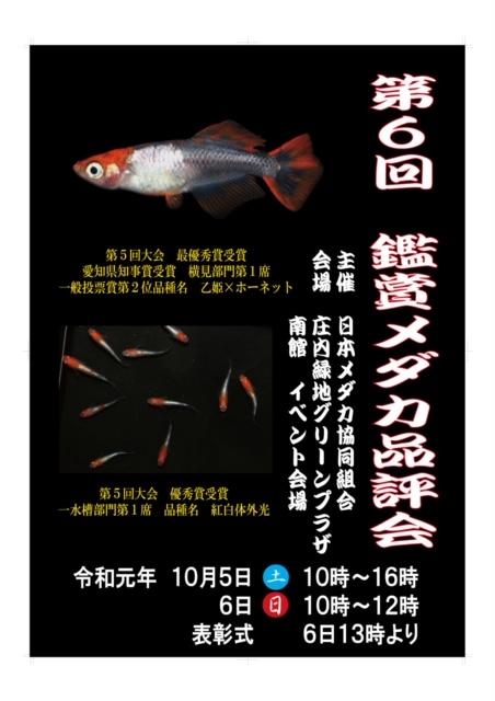鑑賞メダカ品評会