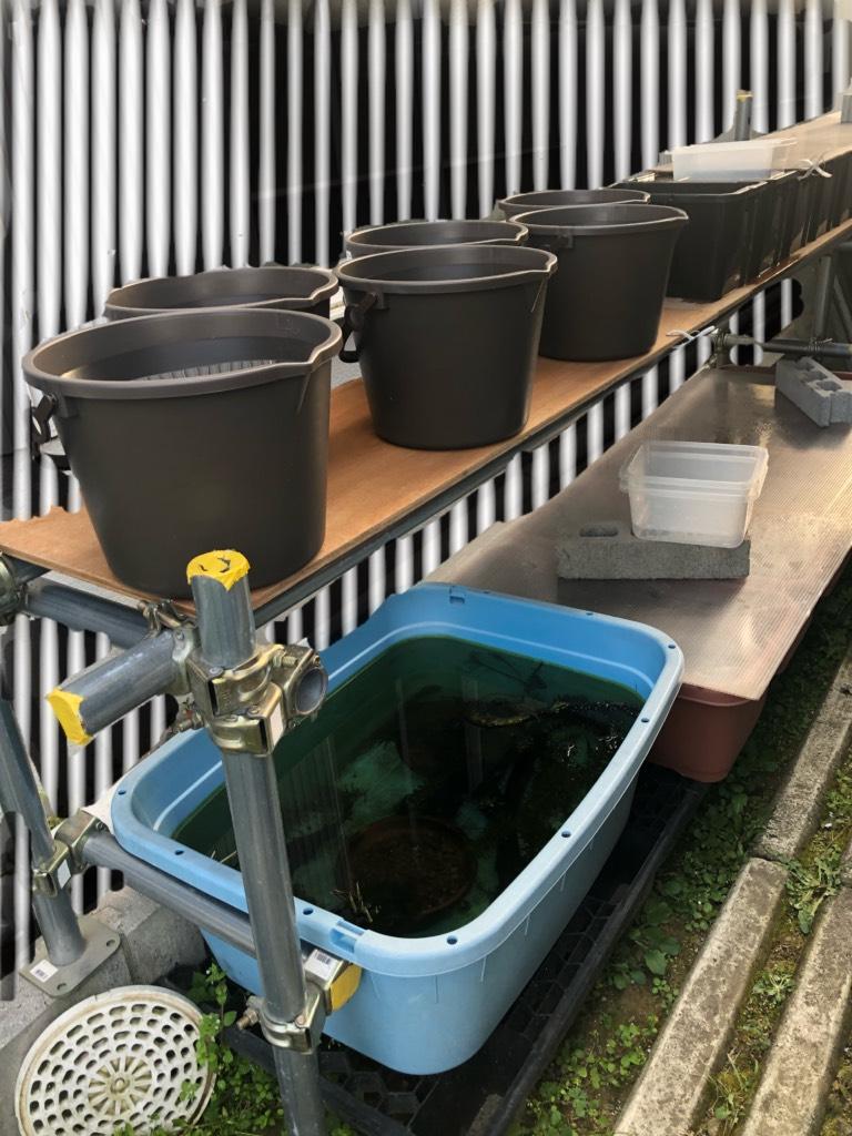 メダカのエアレーションの作り方(メダカの飼育容器と飼育場とバケツ)
