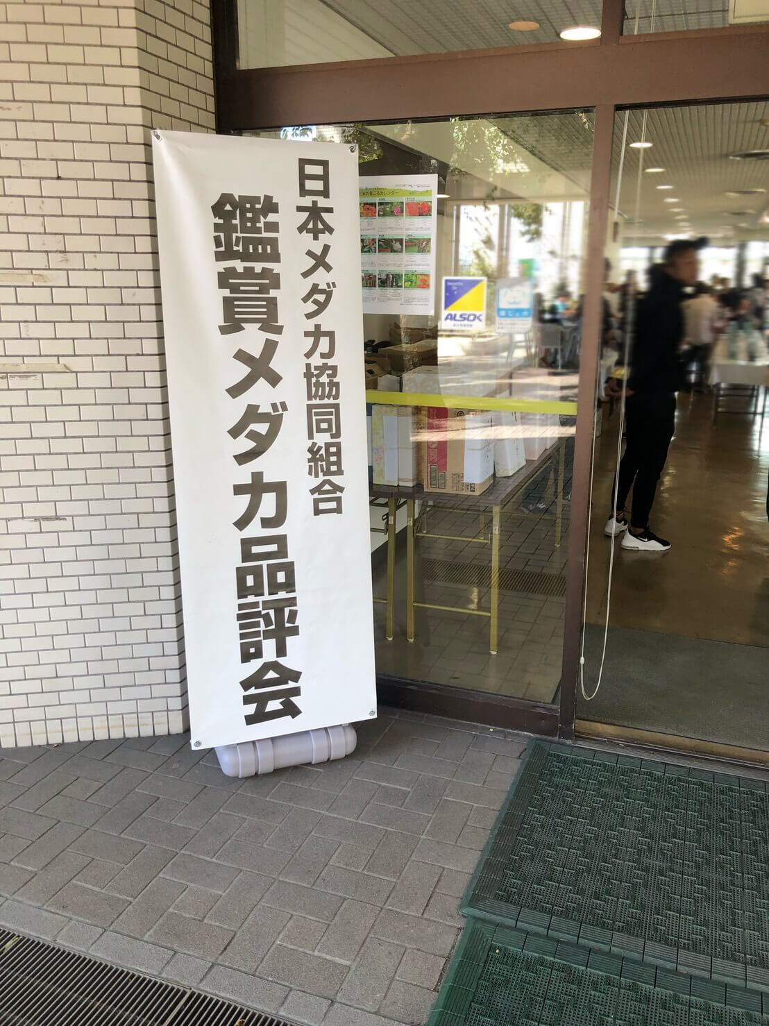 第6回鑑賞メダカ品評会