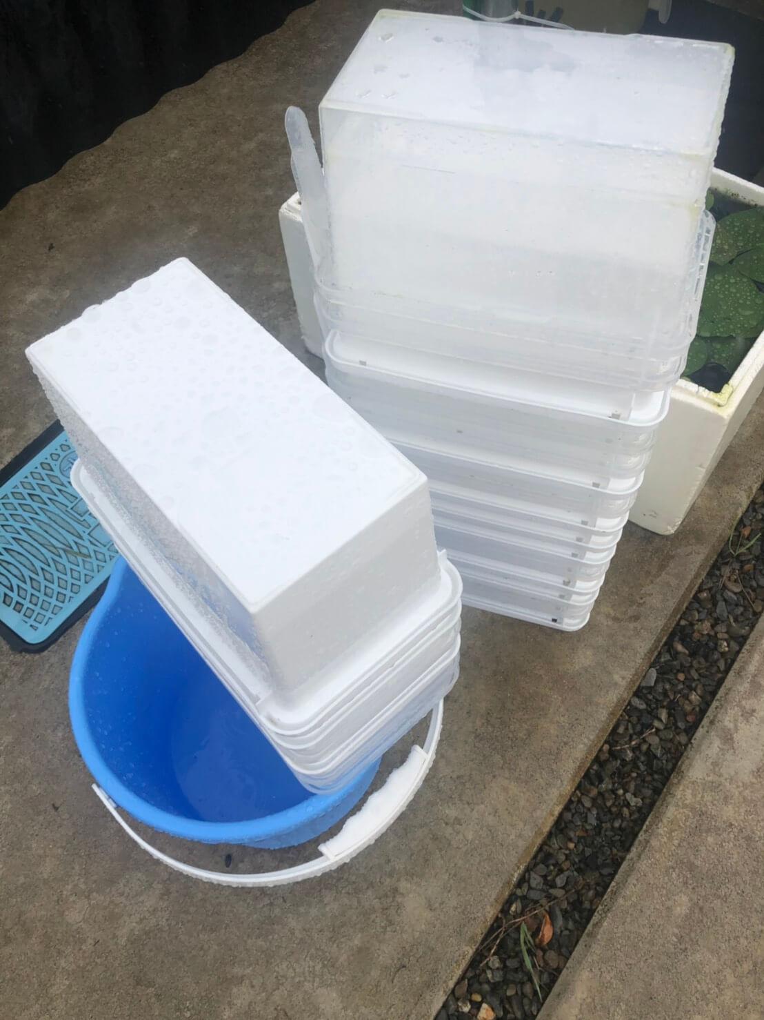 メダカの飼育容器とメダカの水替え