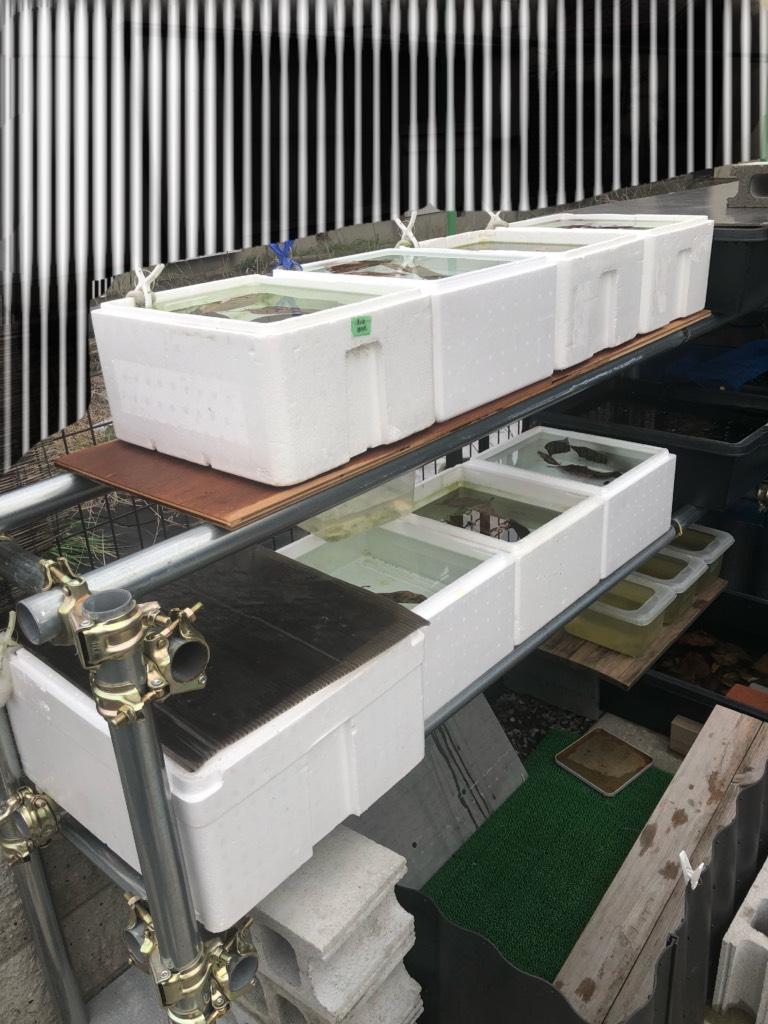 メダカラック(棚)の作り方と単管パイプと飼育場