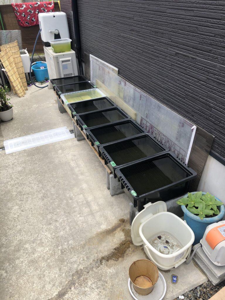 メダカラック(棚)の作り方とメダカの飼育容器とメダカの飼育場