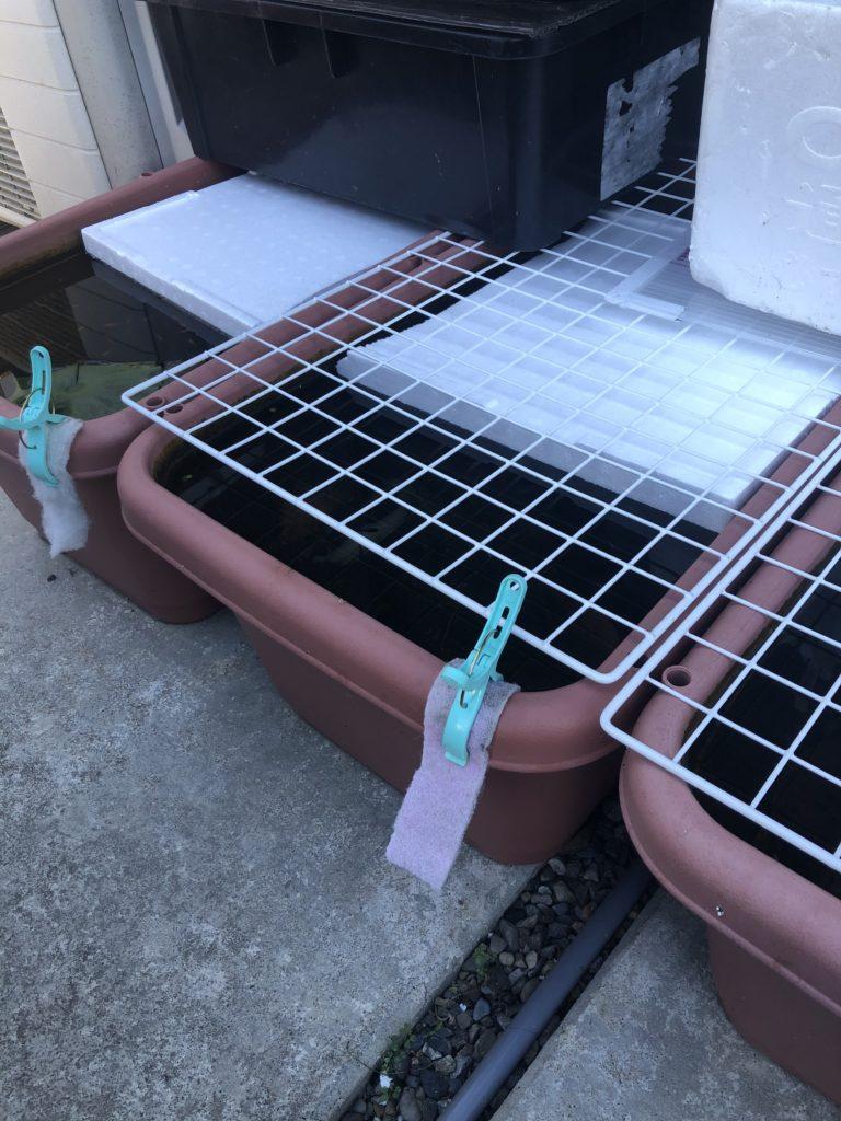 メダカの冬越しとメダカの飼育容器