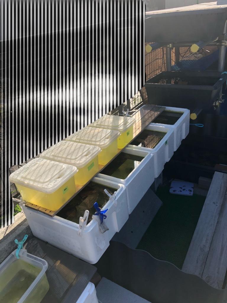 メダカラック(棚)の作り方と飼育容器と飼育場