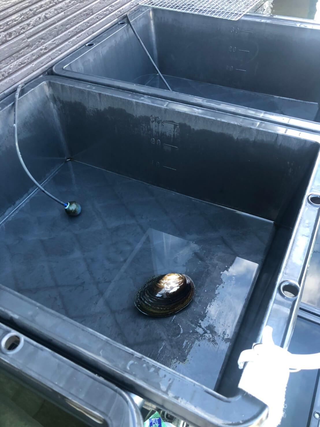 メダカの水替え(水換え)と飼育容器