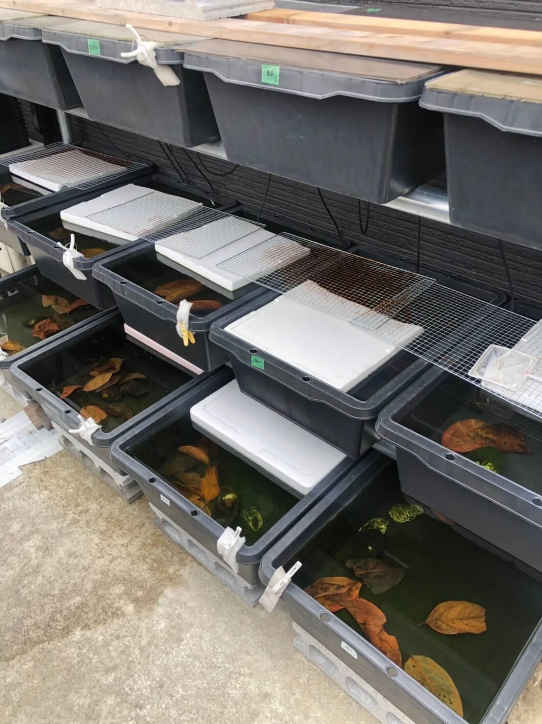 メダカの冬越し用アイテムと飼育容器