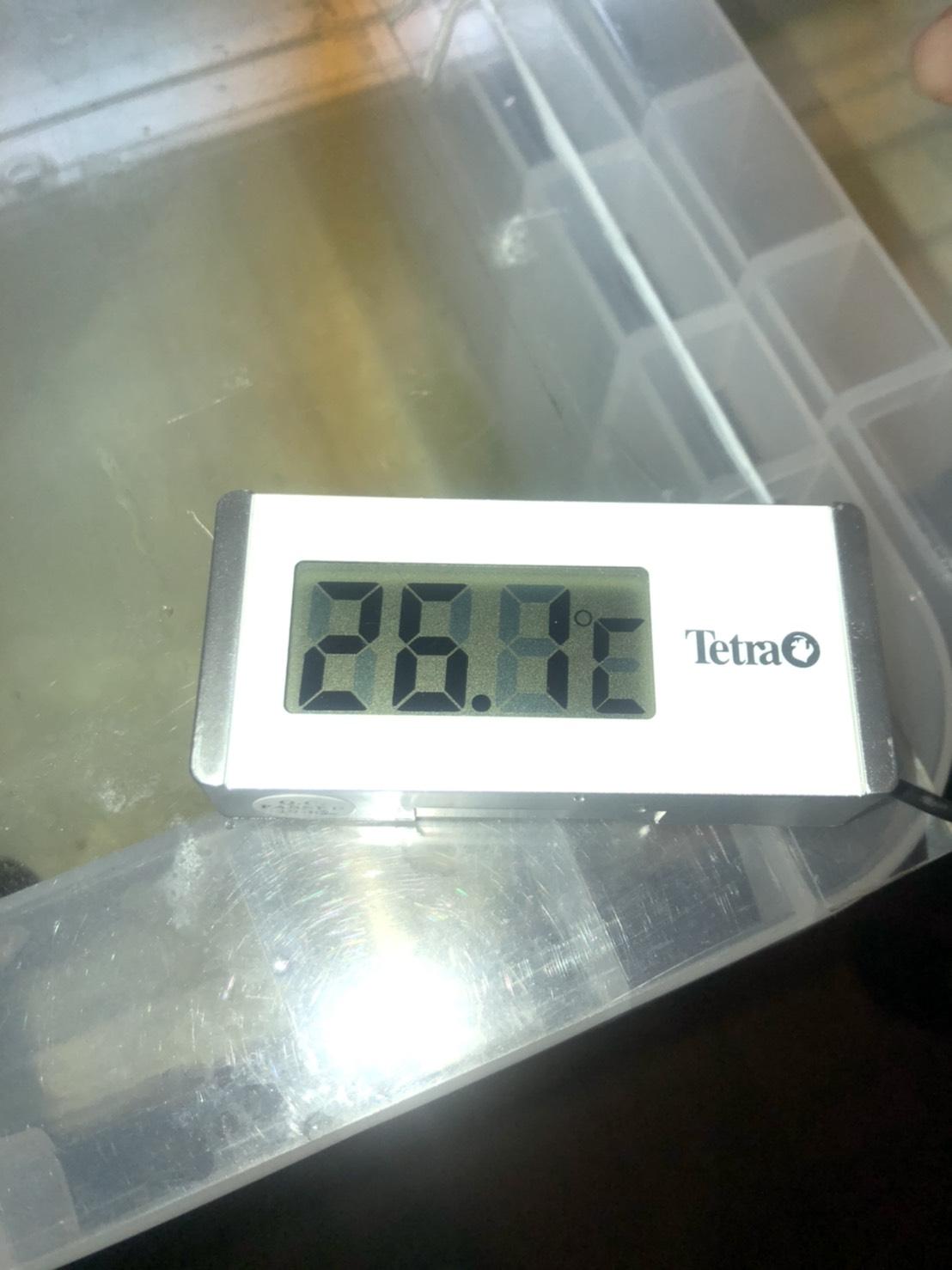 メダカの加温飼育に必要な水温計