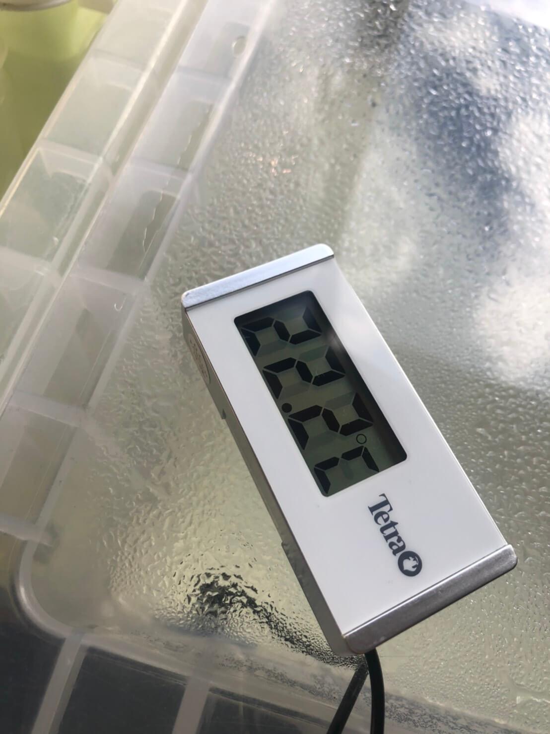 加温飼育に使う水温計