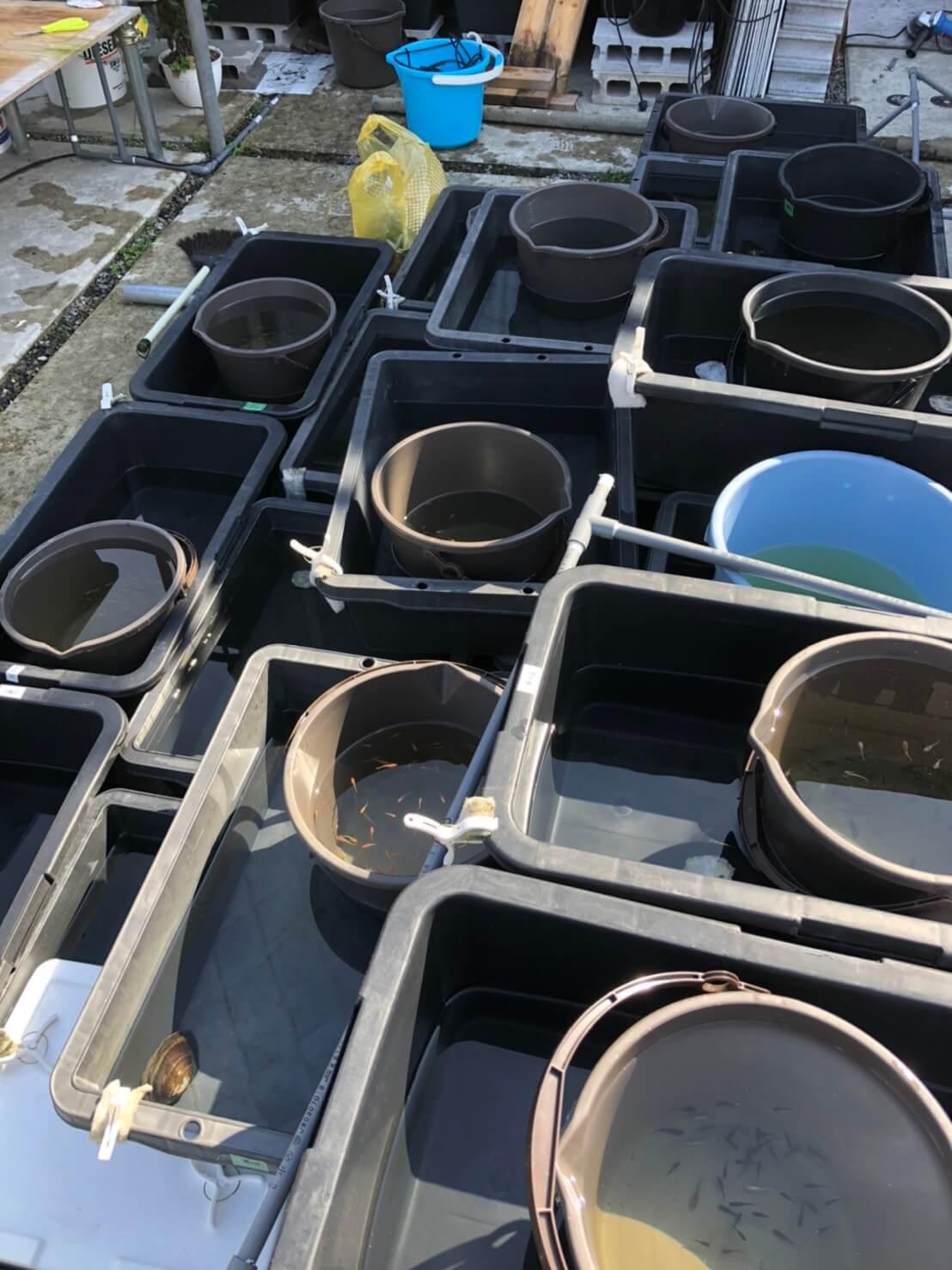 メダカの水替えとメダカの飼育容器