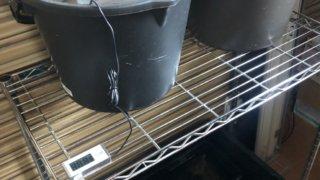 加温中の雷隠メダカと飼育容器