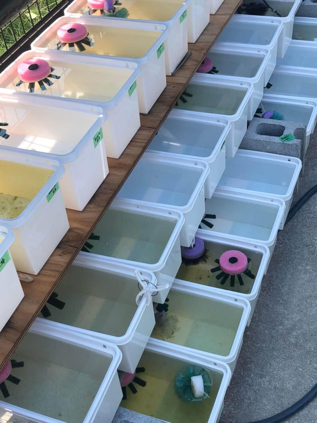 メダカの産卵床が浮かぶメダカの飼育容器