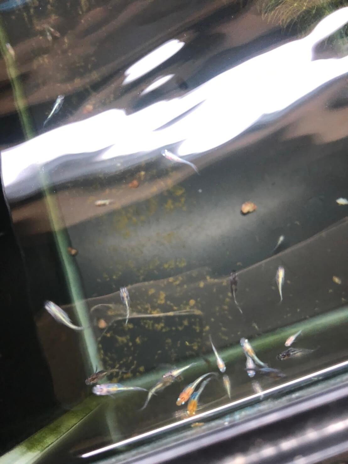 めだか屋BIO-LABO(バイオラボ)奈良県大和高田市のメダカ屋で販売されてるメダカ