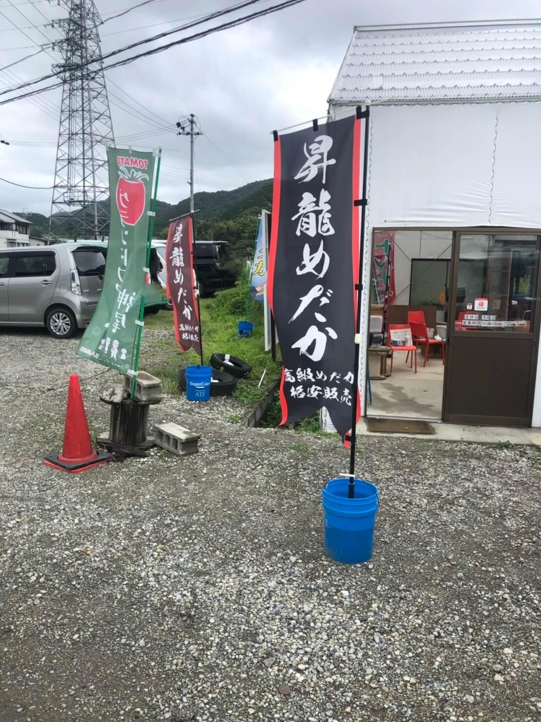 昇龍めだか(兵庫県たつの市のメダカ屋)で販売されてるメダカ
