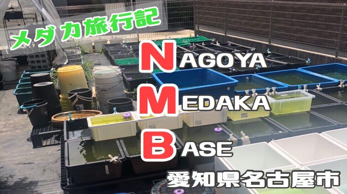 名古屋メダカベース(NMBベース)のめだか屋さんに行ってきました