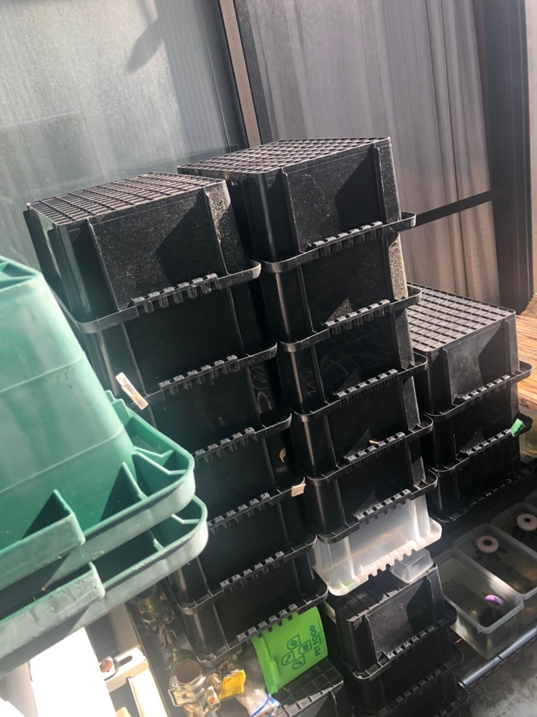 メダカの飼育容器黒