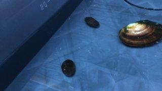 稚魚の泳ぐ飼育容器