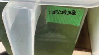 松井ヒレ長三色ラメ幹之メダカ