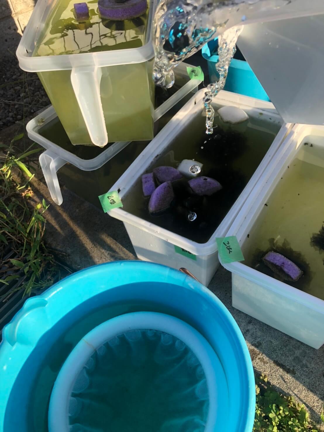 メダカの水換えと飼育容器の掃除(2020年秋)