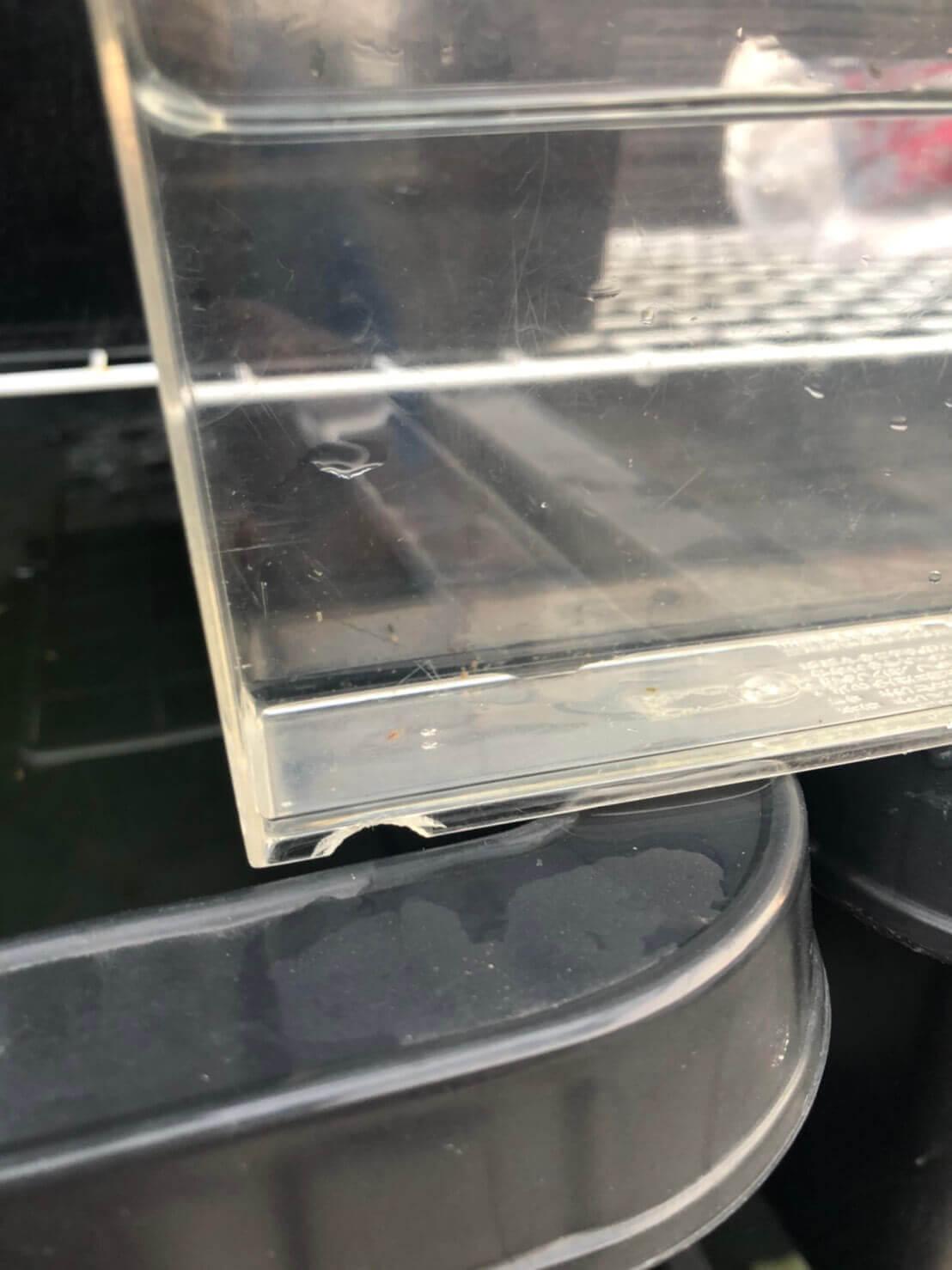 クロレラとエビオス錠を使ったミジンコ培養実験(2020年9月)1日目
