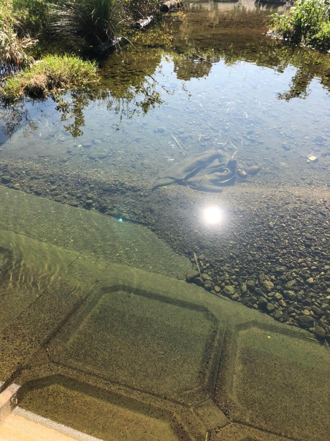 川魚のガサガサ