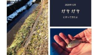 川でのガサガサ活動(2020年12月)