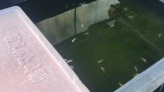 全滅したメダカの飼育容器