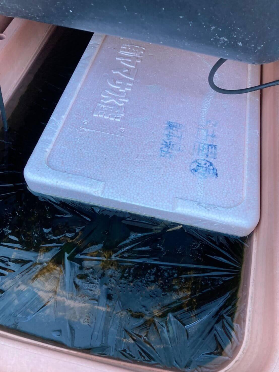 飼育容器内の水が凍る