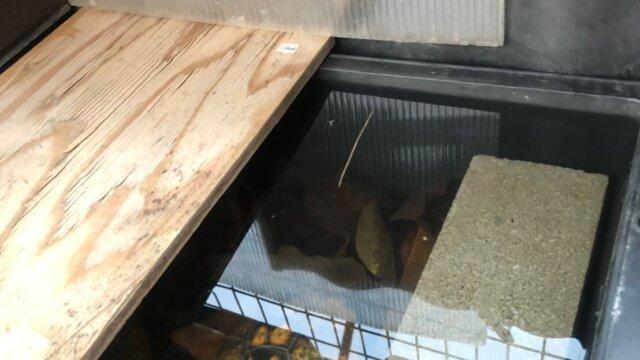 イシガメのハウス冬越し中