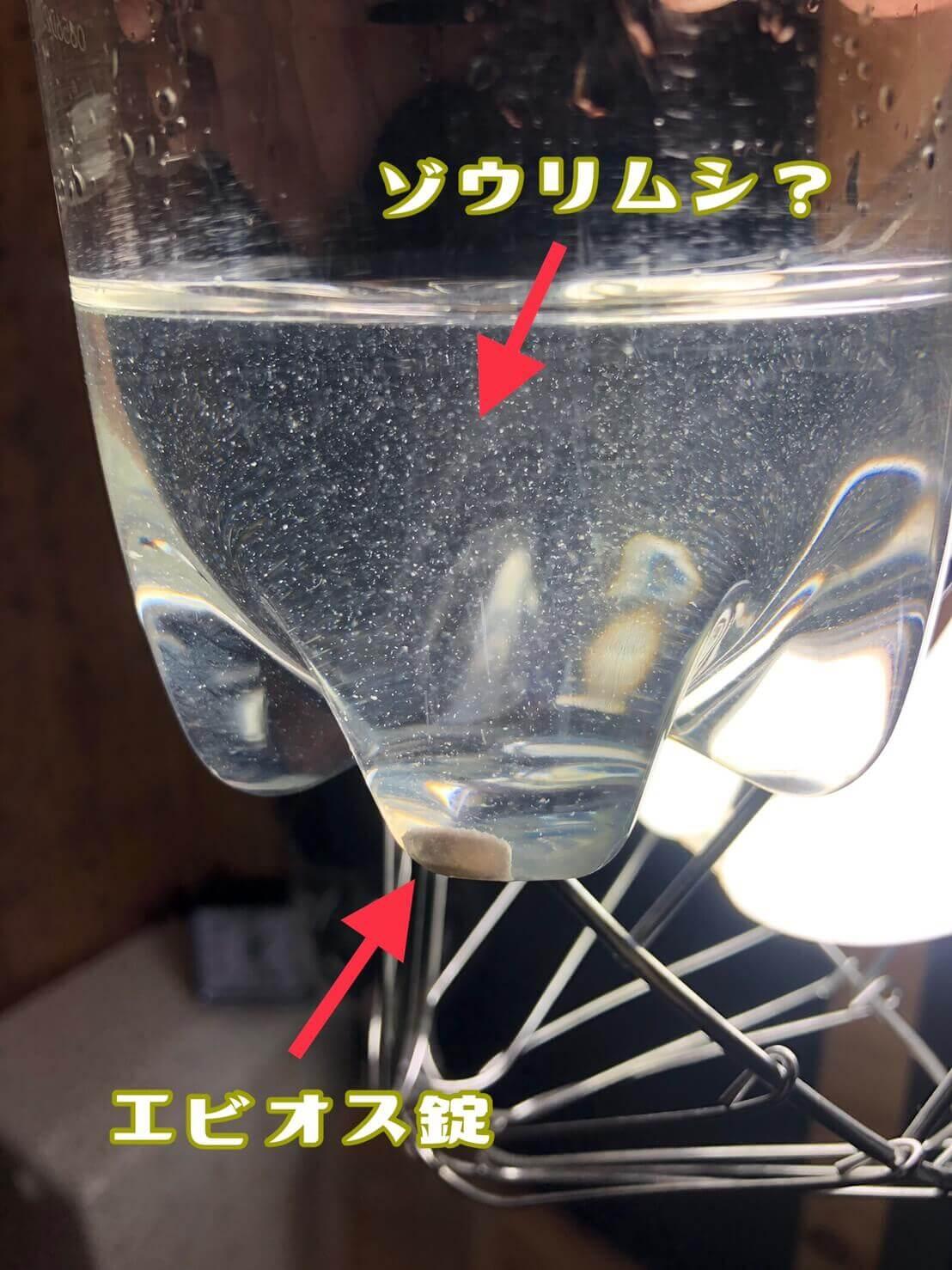 ゾウリムシの培養実験