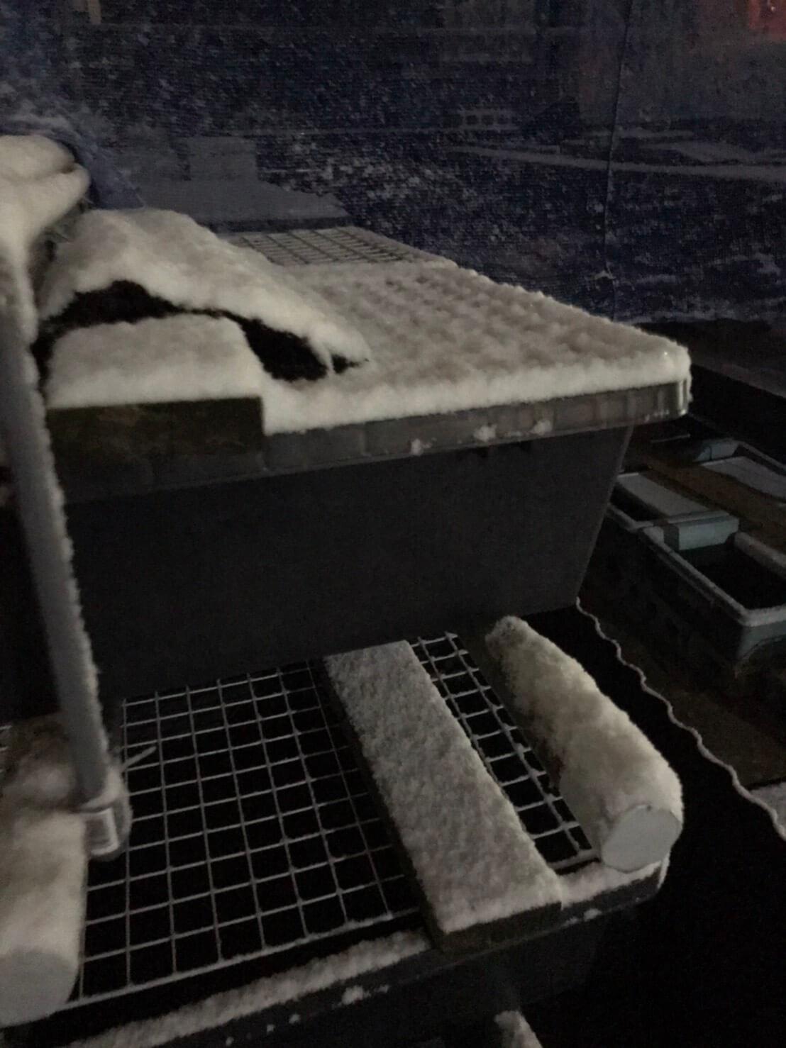 冬場のメダカ飼育容器