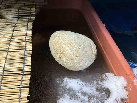 メダカの飼育容器に張った氷