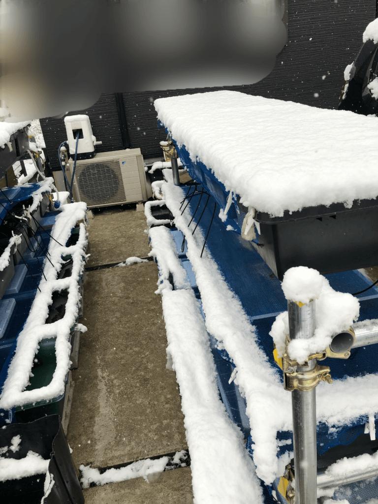 雪の日のメダカ置き場