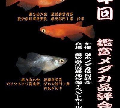 鑑賞メダカ品評会(2017年秋)