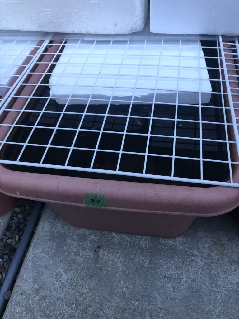 メダカ容器の凍結対策