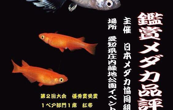 第三回鑑賞メダカ品評会