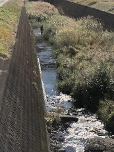 2018年のガサガサ活動は、カメを捕まえて、池の水を抜いて、貝を掘る‼