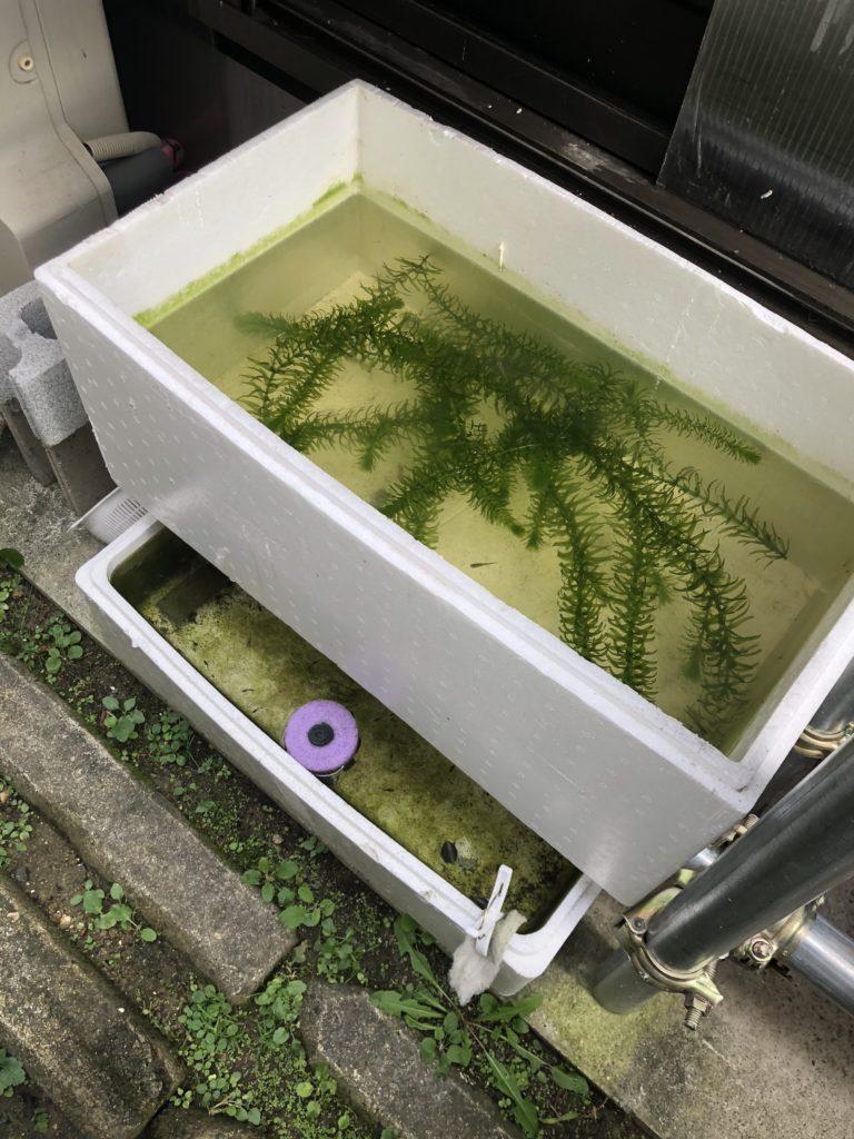 メダカの飼育容器(冬越しの準備中)