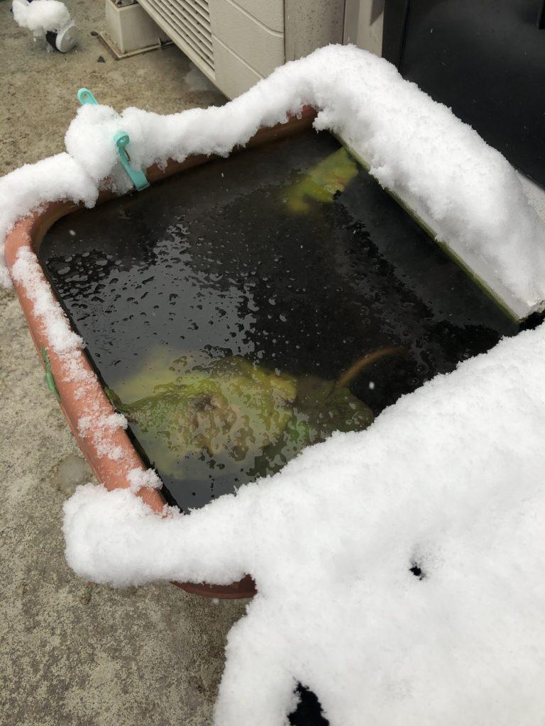 雪の日のメダカ容器