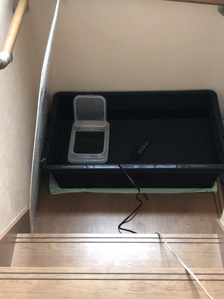 加温中のメダカ容器