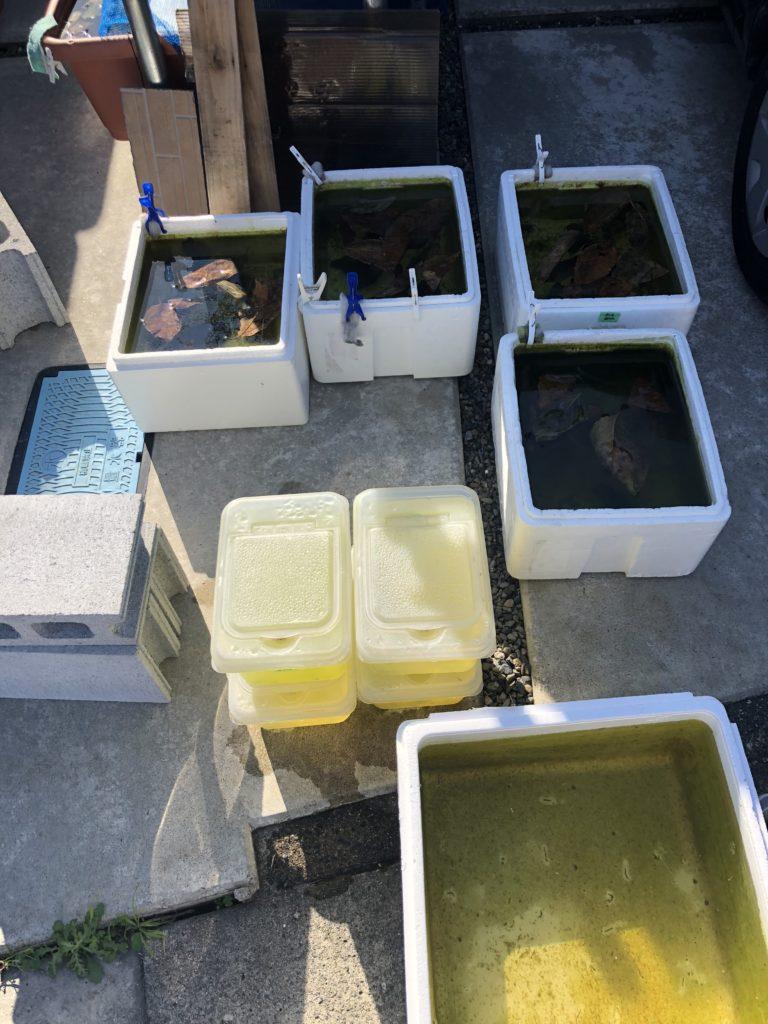 発泡スチロール容器と透明な容器