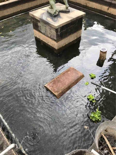 学校の池の水ぜんぶ抜く